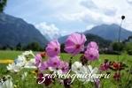 Интерлакен - достопримечательности, путеводитель по городу Берн (Bern), Швейцария - путеводитель по городу. Туристический маршрут по Берну с картой, достопримечательности Берна.