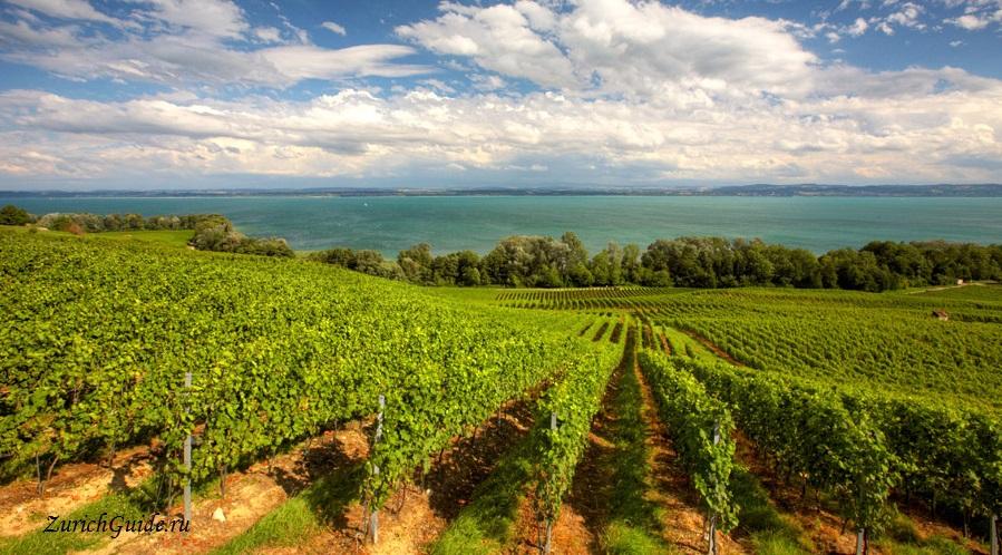 Neuchatel vineyards Невшатель (Neuchatel), Швейцария - путеводитель по городу, достопримечательности Невшателя. Как добраться - расписание, стоимость. Карта Невшателя. Вокруг